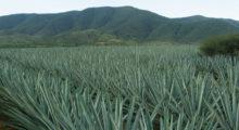 Headbang Un lugar en la Sierra de Michoacán donde se desentierra pura felicidad