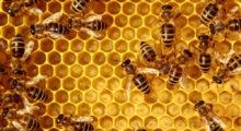 Headbang Una familia china ha vivido 12 años con un panal de abejas en su sala