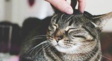 Headbang 10 beneficios científicamente comprobados que te harán amar a los gatos