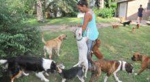 Headbang Sólo para amantes de mascotas: ¡alojamiento gratis en cualquier parte del mundo!