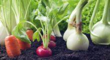 Headbang Vegetales que puedes plantar en tu casa, haz tu huerto urbano