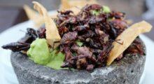 Headbang Un listado de excéntricos y deliciosos insectos comestibles en nuestro país