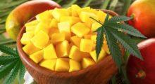Headbang Comer mango y fumar marihuana ¡Combo Ganador!