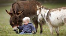 Headbang ¿Te has preguntado cuánto viven los animales y por qué?