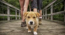 Headbang Los mejores spots de la ciudad para pasear a tu mascota y consentirla