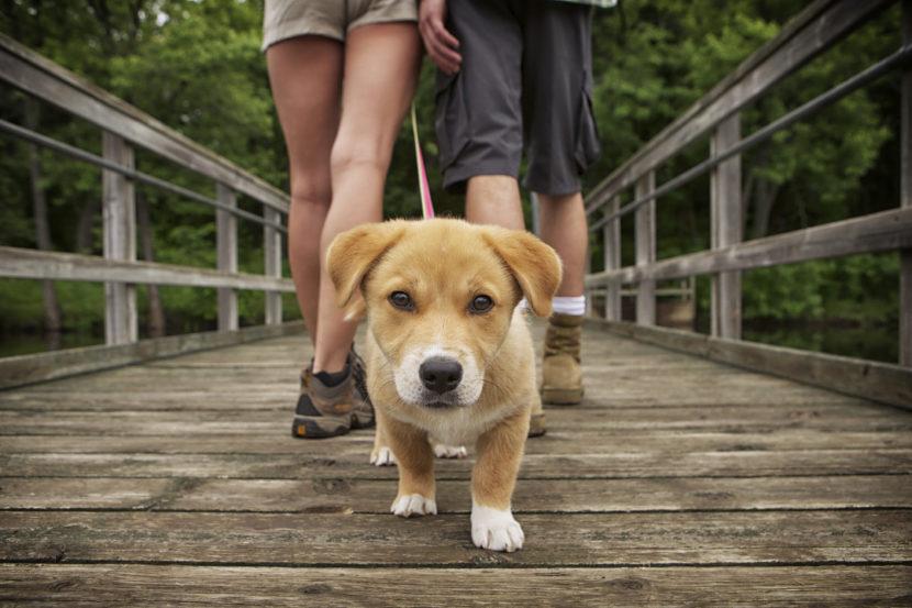 Los mejores spots de la ciudad para pasear a tu mascota y consentirla