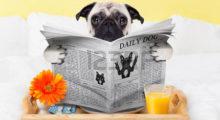 Headbang El primer café para Pugs ya es una realidad