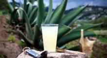 Headbang Mitos y realidades del pulque, orgullo de bebida prehispánica