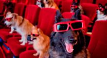 Headbang ¡Entra al cine con tu mascota!