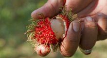 Headbang Las frutas más exóticas del mundo