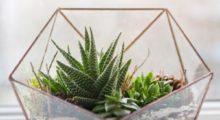 Headbang Cómo hacer tu propio terrario