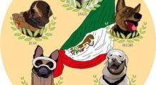Headbang Perros rescatistas que se volvieron héroes cuando más los necesitábamos