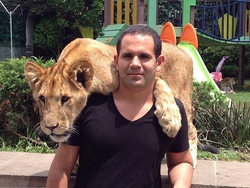 Conoce A Los Tigres Leones Y Panteras Más Tiernos Del Internet
