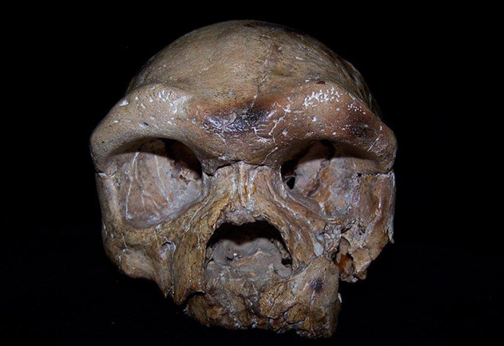 Descubren cráneo de 260 mil años que podrá cambiar la historia como la conocemos.