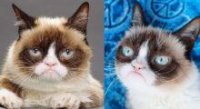 Headbang Punsheen y otros gatos famosos que hay en el mundo e Internet