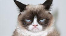 Headbang El gato gruñón de los memes ganó una suculenta demanda