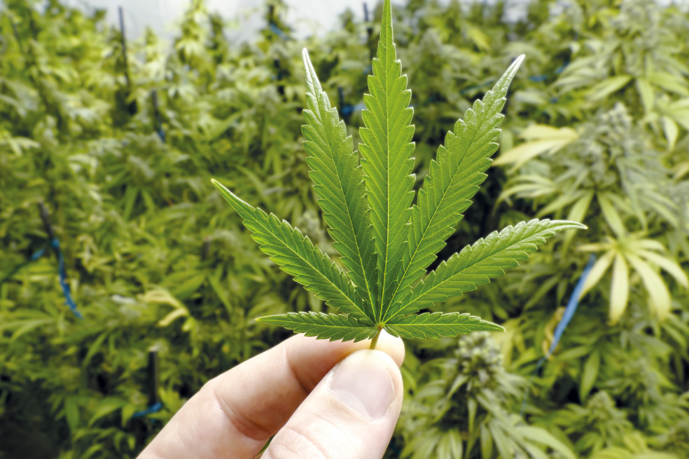 Proponen legalizar la Marihuana en zonas turísticas de México