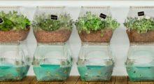 Headbang Aquaponia: El arte de cultivar plantas y criar peces en el mismo espacio
