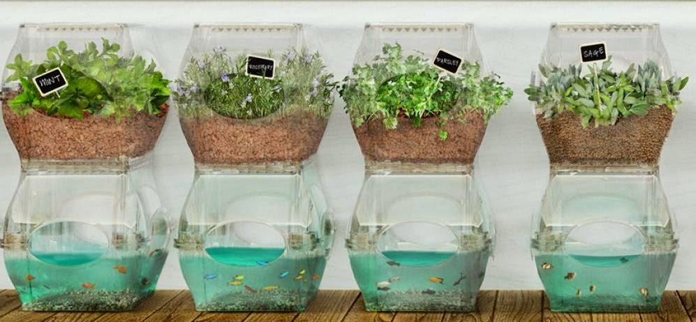 Aquaponia el arte de cultivar plantas y criar peces en el for Como criar peces ornamentales en casa