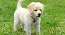 Headbang 5 razones por las cuáles no regalar mascotas en día de reyes