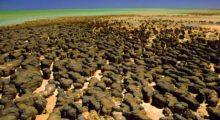 Headbang Vida donde no la imaginas: ¿Qué son los estromatolitos?