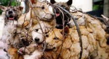 Headbang Los Juegos Olímpicos de Invierno se llenan de Sopa de Perro