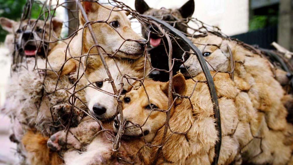 Los Juegos Olímpicos de Invierno se llenan de Sopa de Perro