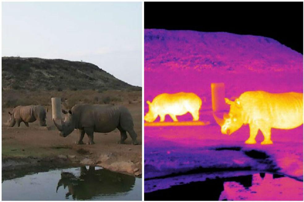 Conoce la tecnología que está salvando a las especies en peligro de extinción