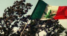 Headbang Corte mexicana mantiene el uso de marihuana en la CDMX por estos términos